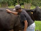 Criadores de leite não encontram mão de obra na Zona da Mata mineira