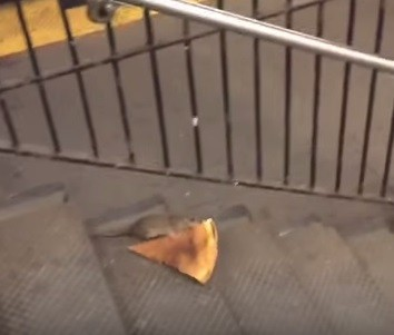 Rato carrega fatia de pizza na Big Apple