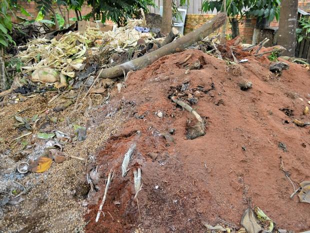 Resíduos orgânicos são deixados para se decompor e produzir a compostagem  (Foto: Hosana Morais/G1)