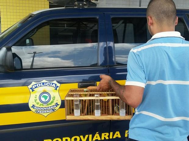 PRF afirma que proprietário das aves já tinha passagem pela polícia em SP (Foto: Divulgação/PRF)