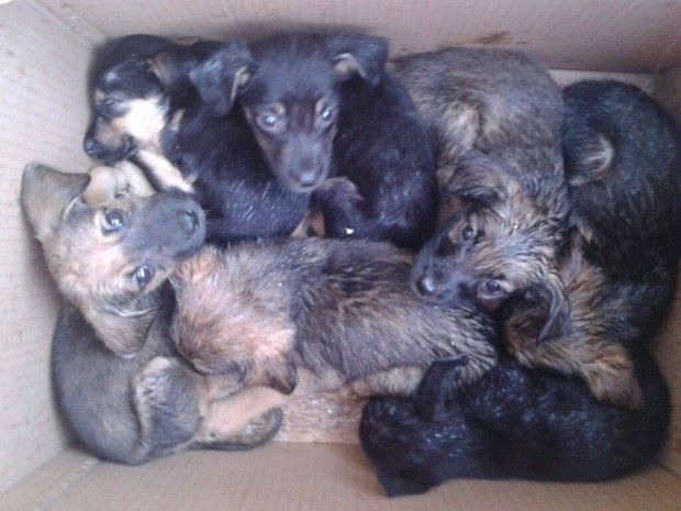 Animais foram deixados dentro de cixa de papelão em frente a um pet shop de Tambaú (Foto: Giovana Uliana/ Arquivo Pessoal)