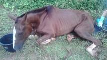 Égua resgatada morre em Tupaciguara (Polícia Militar/Divulgação)