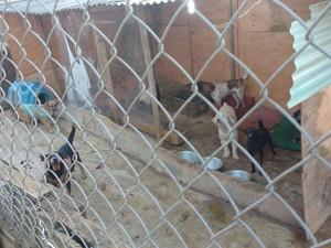 Um dos canis mantidos por idoso em Mogi das Cruzes (Foto: Jamile Santana/G1)