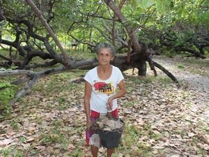 Dona Maria Martins, 72 anos, recolher frutos da árvore e as folhas para fazer adubo (Foto: Gilcilene Araújo/G1)