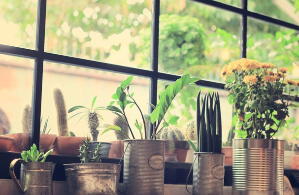 Plantas para dentro de casa (Foto: Thinkstock)