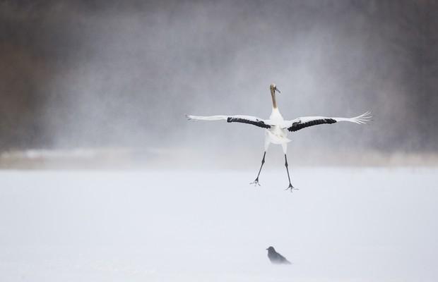 Segundo lugar da categoria Melhor Imagem - Selvagem e Vibrante (NÂO USAR) (Foto: Marco Urso/www.tpoty.com)