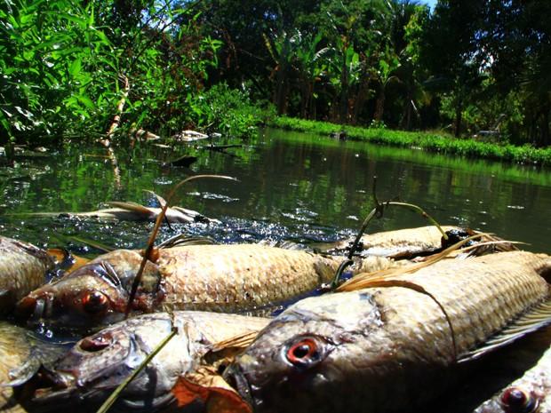 Peixes foram encontrados mortos em rio de João Pessoa (Foto: Rizemberg Felipe / Jornal da Paraíba)