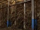 Estimativa de produção de cana é revisada para baixo no centro-sul