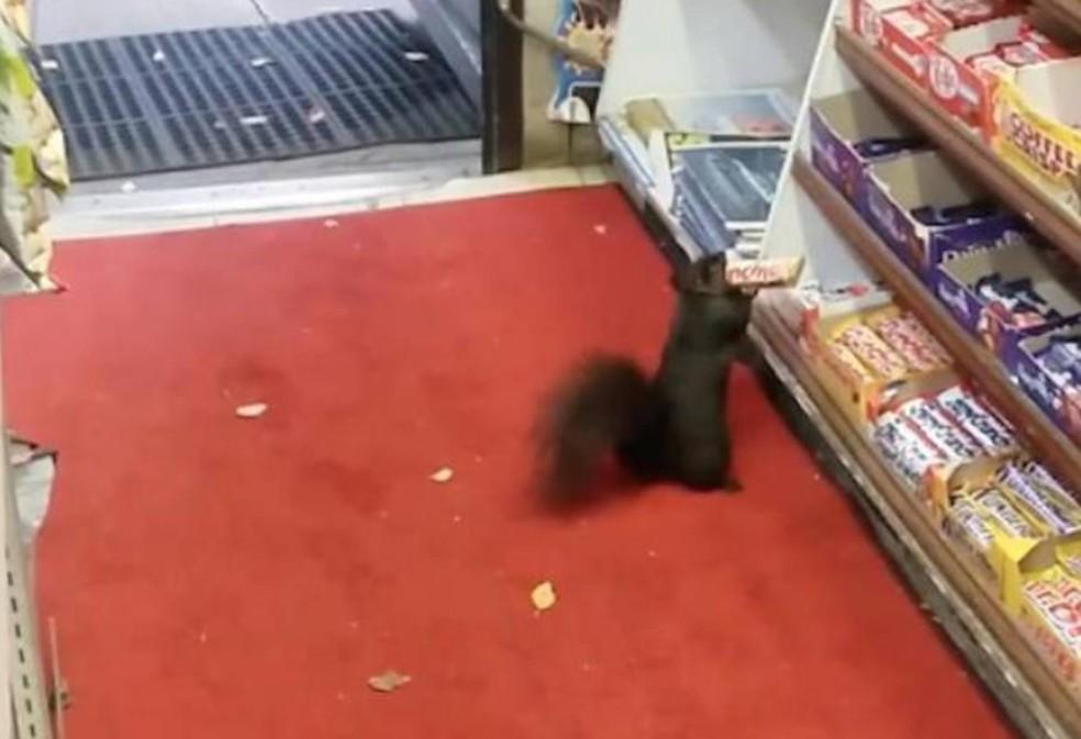 Esquilo foi flagrado roubando barra de chocolate de loja de conveniência (Foto: Reprodução/YouTube/StopThatSquirrel DropThatBar)
