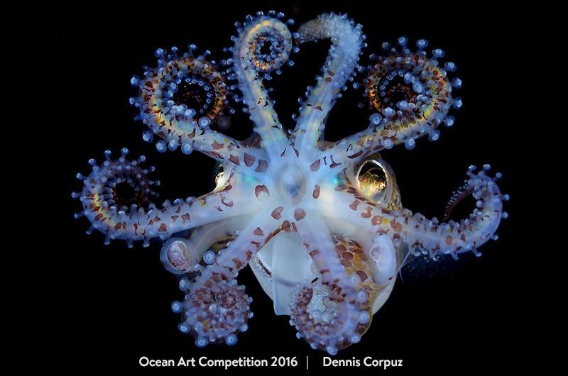Categoria 'macro', vencida por Dennis Corpuz (Foto: Dennis Corpuz/Ocean Art Competition 2016)