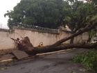Temporal derruba árvores em bairros de Cuiabá e causa queda de energia