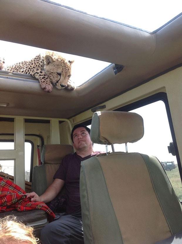 Edgar Cobos no momento em que o guepardo sobe no veículo (Foto: www.theluxurysafaricompany.com/Divulgação)