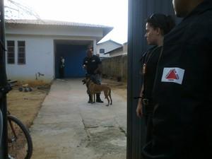 Cães farejadores foram utilizados durante operação (Foto: Michelly Oda / G1)