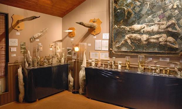 O Museu Falológico da Islândia (Foto: Wikimedia Commons/Celander)
