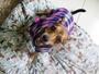 Conheça a cachorrinha Kira e saiba sobre a sua história de adoção e amor