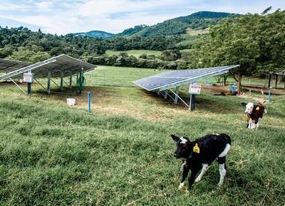 vaca-fazenda-nata-da-serra-leite-organico-381 (Foto: Alexandre Battibugli/Ed. Globo)