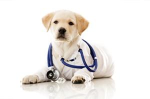 Os pets também podem ser ótimos terapeutas (Foto: thinkstockphotos)