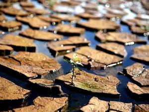 Imagem da represa reserva Jaguari- Jacareí, na cidade de Piracaia, no interior de São Paulo, onde o índice que mede o volume de água armazenado no Sistema Cantareira voltou a registrar uma leve alta, nesta quinta-feira (19). Segundo a Sabesp, o volume arm (Foto: Luís Moura/Estadão Conteúdo)