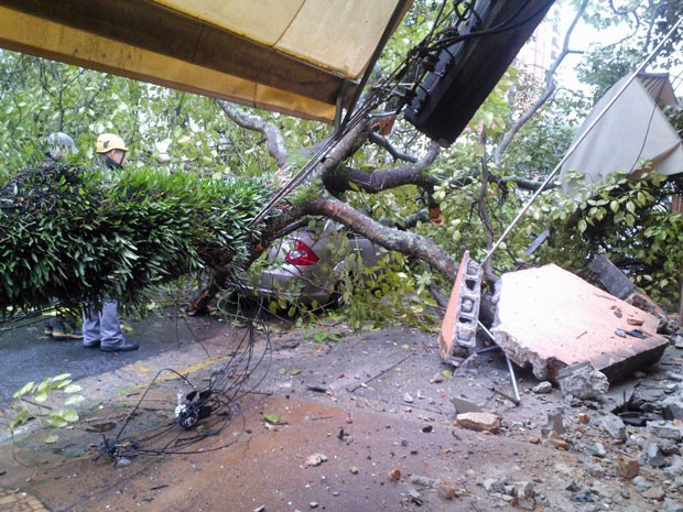 Segundo a CET, não houve registro de lentidão na via por causa da queda da árvore (Foto: Fábio Tito/G1)