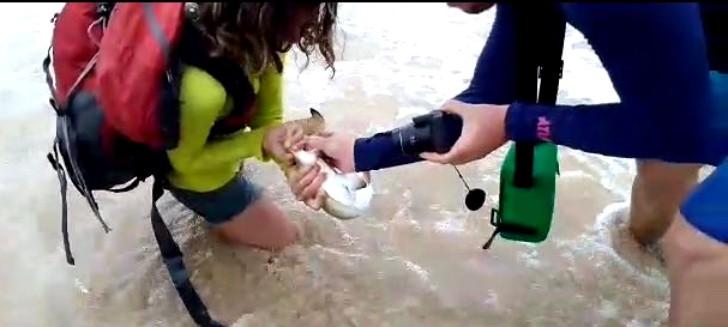 Turista tubarão 3