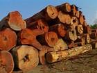 Governo inclui dois municípios em lista de desmatadores da Amazônia