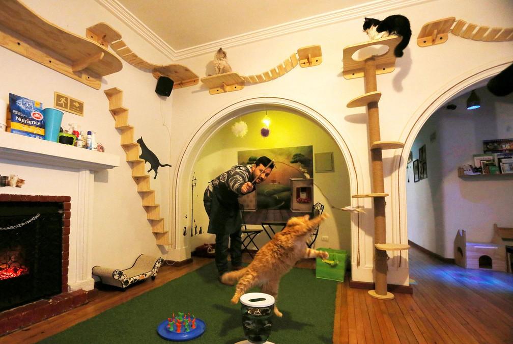 Santiago do Chile ganha 'cat cafe' para quem quer interagir com gatos (Foto: Carlos Vera/Reuters)