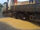 Polícia apreende 333 kg de cocaína em meio a carga de milho