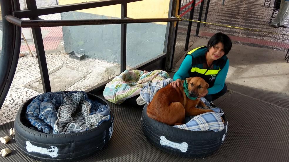 Neuza é moradora da região e trata dos cães com a ajuda de ONG e de voluntários  (Foto: Adriana Justi/G1)