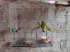 Homem paga R$ 5 mil por manter papagaio em extinção em cativeiro