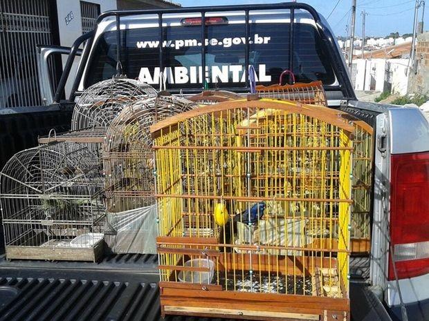 Pelotão de Polícia Ambiental apreende aves silvestres em Aracaju (Foto: Divulgação/Pelotão Ambiental)