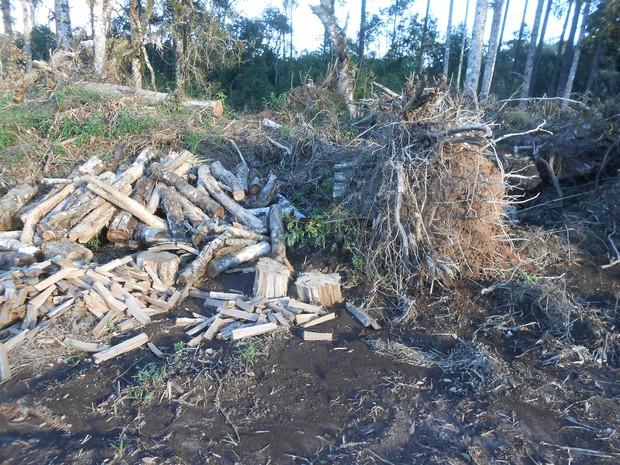 Desmatamento foi descoberto na segunda-feira (30) (Foto: Divulgação/Polícia Ambiental)