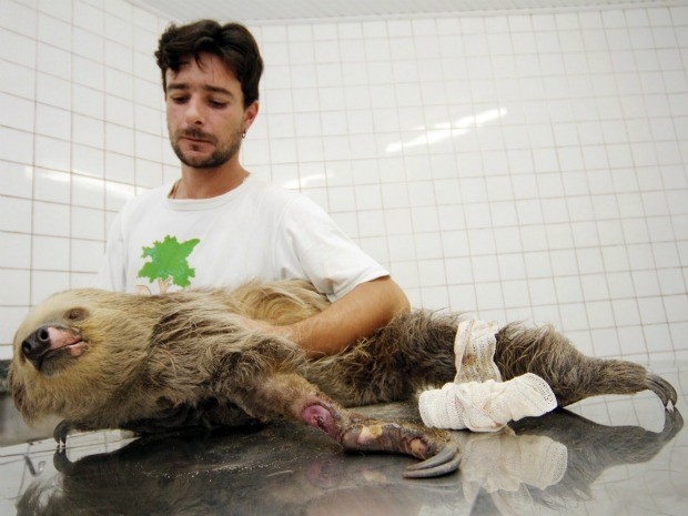 Animal teve pata machucada devido à força da descarga elétrica (Foto: Márcio James/Semcom)