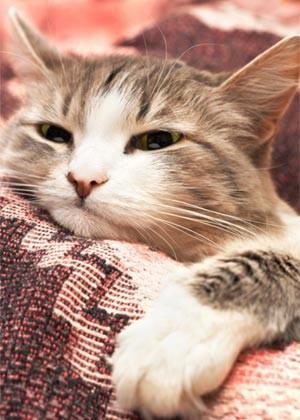 Gatos e tecidos como algodão, seda e linho não  combinam, pois desfiam facilmente. Dê preferência  aos encorpados e fortes, como o couro (Foto: Shutterstock)