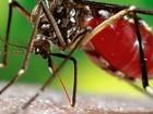 Porto Rico confirma primeiro caso de zika vírus