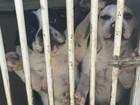 Leilão de cachorros apreendidos em ação da PF tem baixa procura, em RO