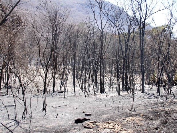 Incêndio em Cordieiros (Foto: Vanderlei Santos/Cordeiros em Foco)