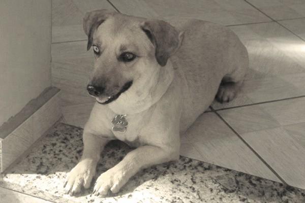 Bebel Amicao (Foto: divulgação)