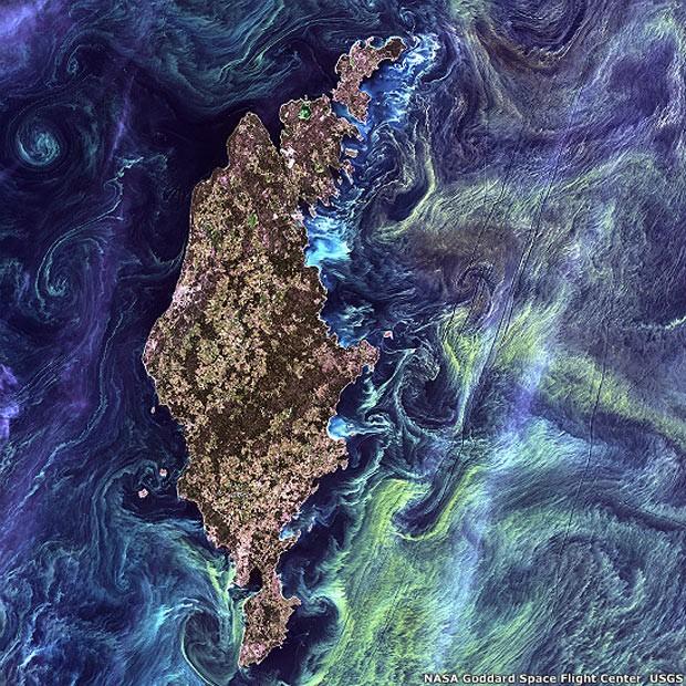 No estilo de uma pintura impressionista do Van Gogh, redemoinhos de uma enorme quantidade de fitoplâncton contrastam com as águas escuras do mar Báltico (Foto: NASA's Goddard Space Flight Center/USGS)