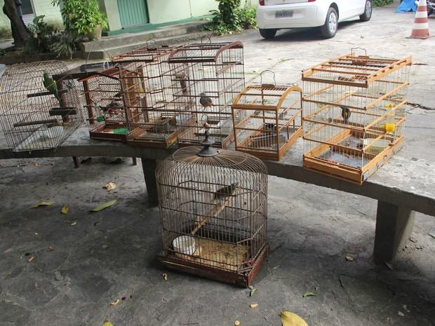 Pássaros resgatados pela CPRH em Xexéu, Zona da Mata Sul de PE (Foto: Divulgação/ CPRH)