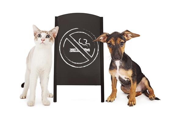 Fumaça de cigarro também faz mal para cães e gatos  (Foto: thinkstockphotos)