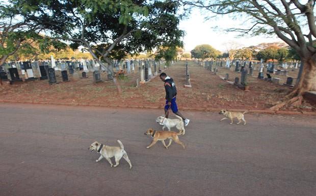 Homem passeia com cães no cemitério de Warren Hills (Foto: Tsvangirayi Mukwazhi/AP)