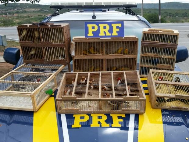 Pássaros foram apreendidos no município de São Caetano  (Foto: Divulgação/PRF)