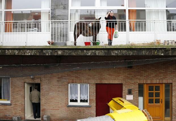 Burro era mantido em varanda de apartamento em Bruxelas  (Foto: François Lenoir/Reuters)