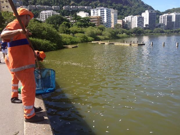 Agentes da Comlurb retiram peixes mortos na Lagoa na manhã desta quarta-feira (13) (Foto: Isabela Marinho / G1)