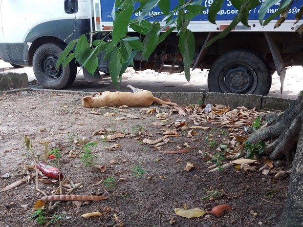 amapá, macapá, animal, morto, tiroteio (Foto: John Pacheco/G1)