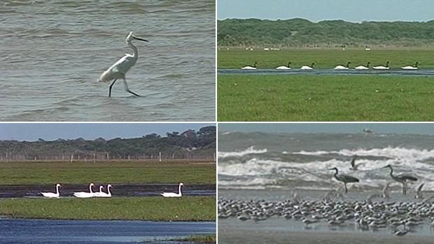 Lagoa do Peixe (Foto: Reprodução/RBS TV)