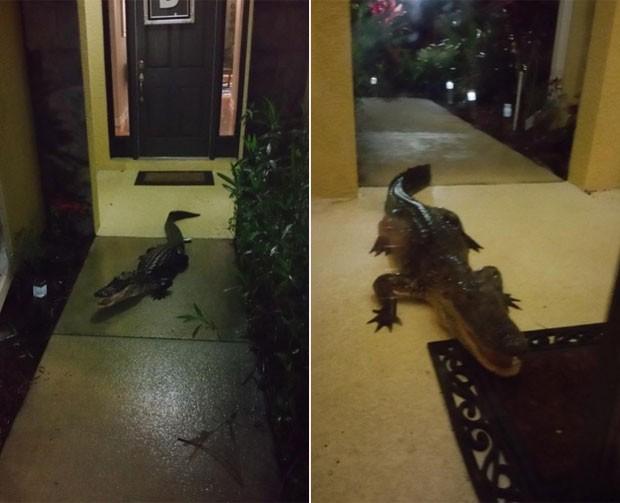 Casal foi alertado por cão sobre presença de jacaré (Foto: Reprodução/Twitter/Daniel Benton)