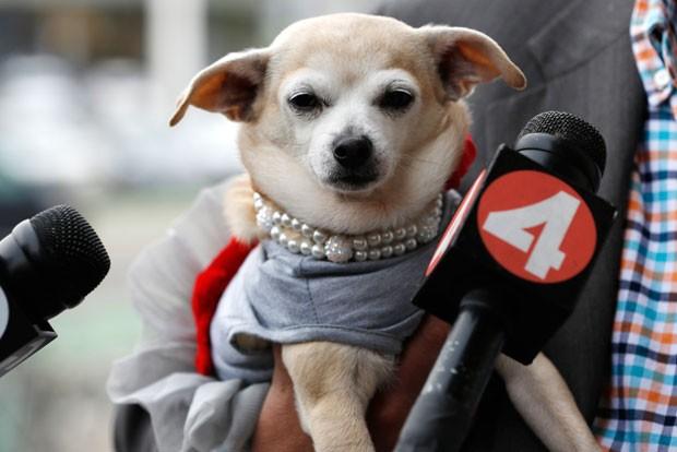 Cadela chamada Frida foi nomeada prefeita por um dia de San Francisco (Foto: Stephen Lam/Reuters)