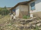 MPT flagra trabalho irregular em lavouras da região de Campinas