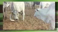 Toxinas na ração causaram a morte de mil animais